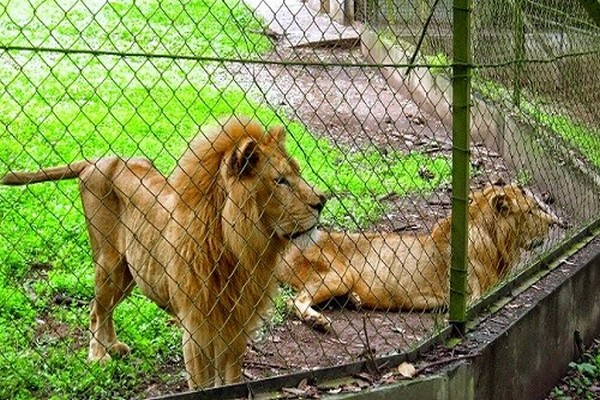 Lion-cage-at-Jos