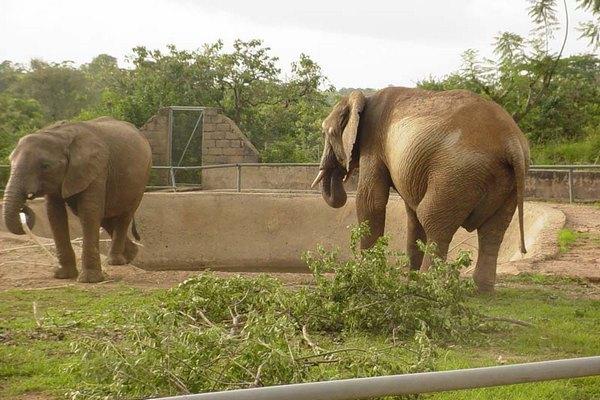 Elephants-at-Jos