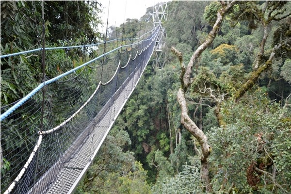 canopy-walk-way
